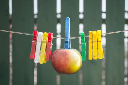 clamps: Apple hang on rope between clamps on green background