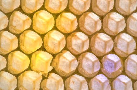 honey comb: Empty Honey Comb