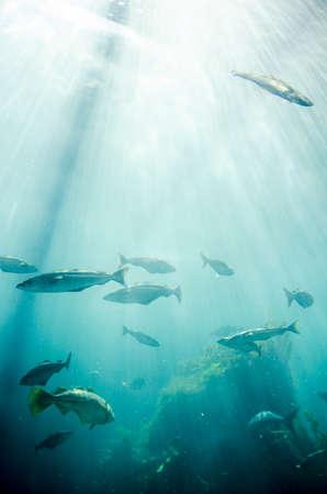 Fish - Marine life - School of fish - Underwater photo