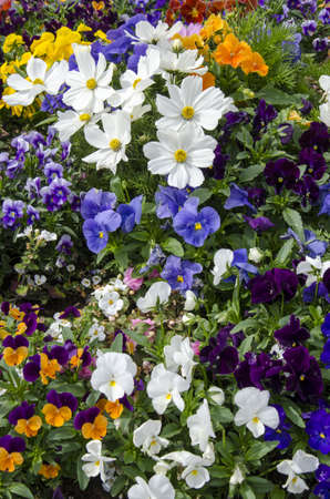 Beautiful flowers - Pretty spring flowers and gorgeous summer blooms photo
