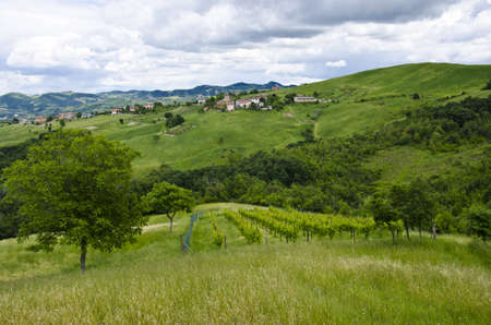 Summer season - view from the hill, rows of vineyards, village in background, near Sassuolo, Province of Modena, Region of Emilia-Romagna - Italy - Europe  photo