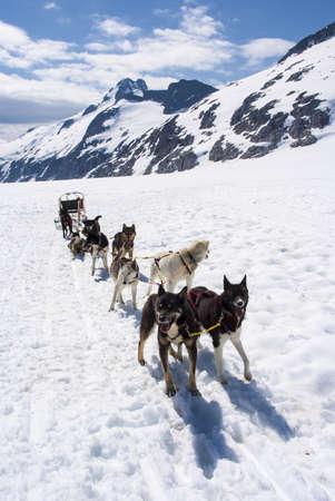huskys: Alaska - Dog Sledding - Travel Destination Stock Photo