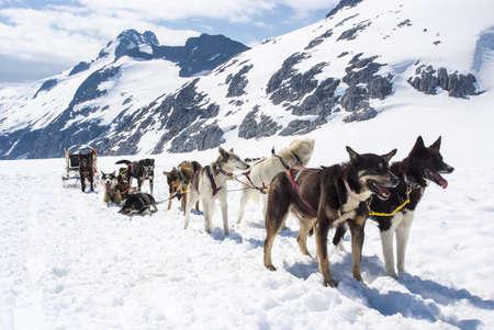sledge: Alaska - Trineo de perros - Destino del viaje Foto de archivo