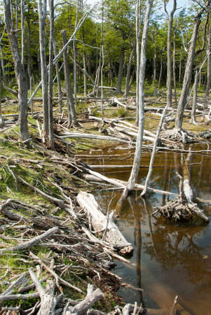 tierra: Argentina - Ushuaia - Tierra del Fuego - Damage To The Environment And Forests Stock Photo