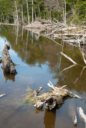 Argentina - Ushuaia - Tierra del Fuego - Damage To The Environment And Forests Stock Photo