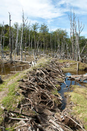 environment damage: Argentina - Ushuaia - Tierra del Fuego - Damage To The Environment And Forests Stock Photo
