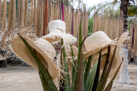 Special Display Of Unfinished Straw Hats - Hats in South America