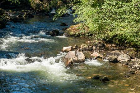 Salmons in Alaska USA  - Ketchikan Creek River Stock Photo
