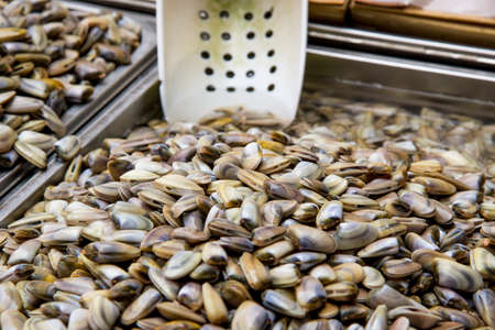 segmented bodies: Clams - Class: Bivalvia - Seafood in Fresh Food Market - Catania, Italy Stock Photo