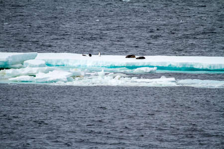 Floating Ice in the Antartica as the effect of the global warming