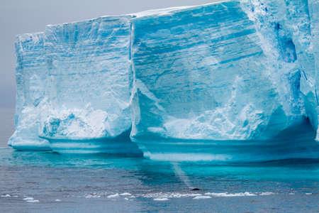 desert ecosystem: Antarctica - Antarctic Peninsula - Palmer Archipelago - Neumayer Channel - Global warming - Whalein front of Tabular Iceberg in Bransfield Strait