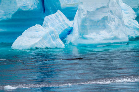 Antarctica - Antarctic Peninsula - Palmer Archipelago - Neumayer Channel - Global warming - Whalein front of Tabular Iceberg in Bransfield Strait