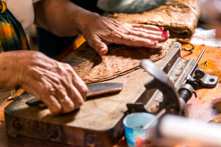 Close-Up photo of a woman preparing a cuban cigar in Casa de la Cultura, Trinidad, Sancti Spritus Province, Cuba, West Antilles, Central America. Photo taken on 3rd of November, 2019 写真素材
