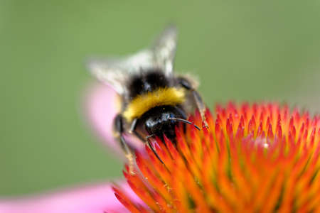 European honey bee on the flower. Flowers provide bees with nectar and pollen. Bees provide flowers with the means to reproduce, in a process called pollination. Without pollination, plants cannot create seeds.