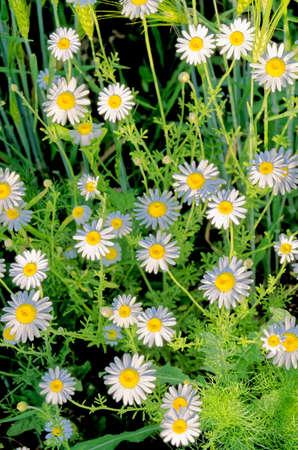 Wilde vegetations in garden - East of England - United Kingdom Standard-Bild