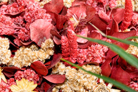 Close-up Of Dead Flowers Background - Natural background - Nature