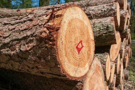 slump: Tree slump Stock Photo