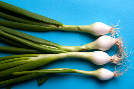 bulb and stem vegetables: fresh young onions with stems on a blue background from above Stock Photo