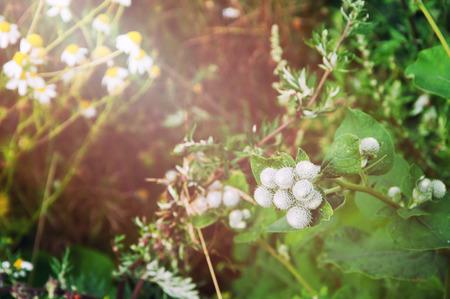 weeds: The image of weeds