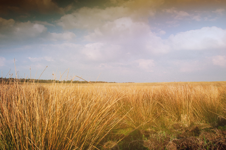 farmland: The image of farmland.