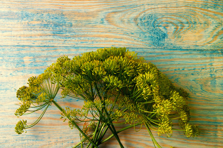 Fennel on a wooden table. Stock Photo