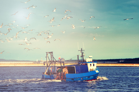 trawl: Fishing boat returning to home harbor with lots of seagulls.