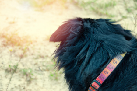 Black dog sitting and resting on the sand. Stock Photo