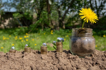 piles of money and flowers saved. Outdoor background.