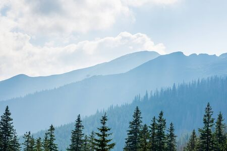 Forest and Polish mountains Tatry on a beautiful sunny day.