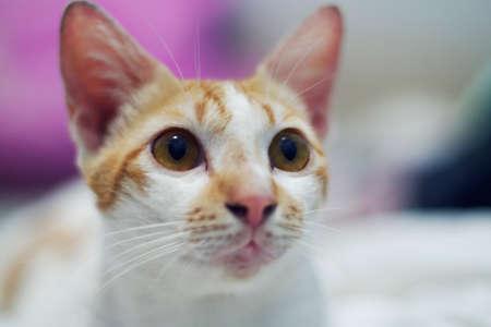 Cat close up with creamy bokeh Stock Photo