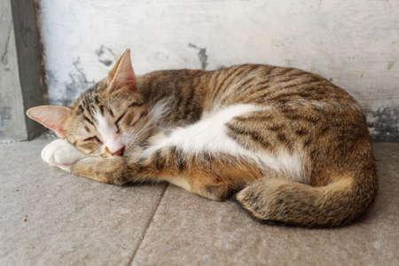 Il gatto dorme sul pavimento Archivio Fotografico - 82800856