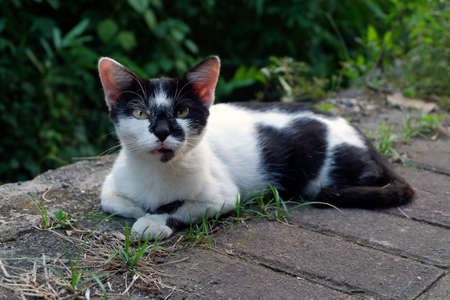 Cat sitting beside paved road Stock Photo