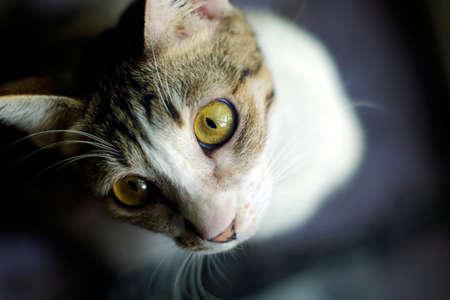 Cat extreme close up