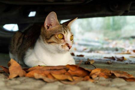 Cat sitting under car