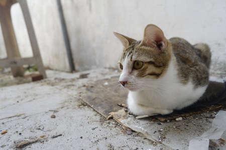 Cat sitting on floor Stock Photo