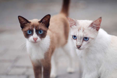 Two cat close up with creamy bokeh