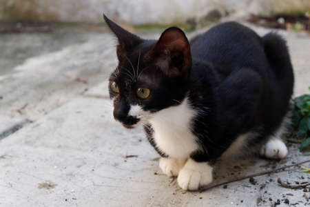 Black and white cat sit on concrete