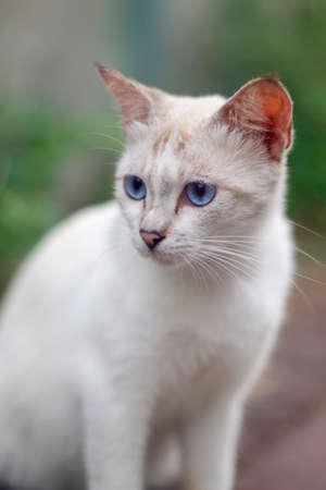 White cat close up