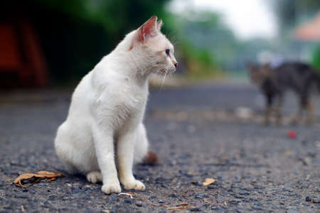 White cat in the road Stock Photo
