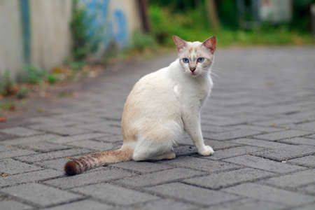 Full body of white cat looking to the side