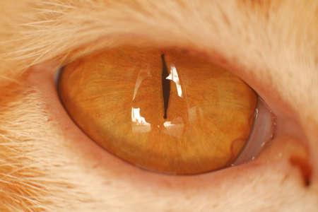 Macro of Cat Eye