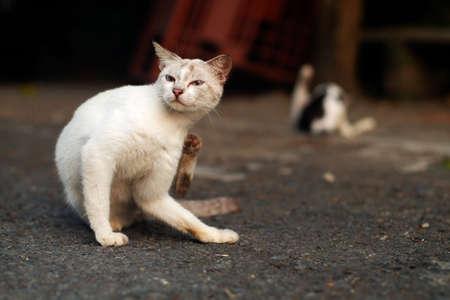 Cat Scratching Herself