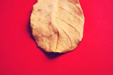 Gold Leaf Stock fotó