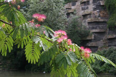 flores exoticas: rama de árbol con flores de color rosa exóticos