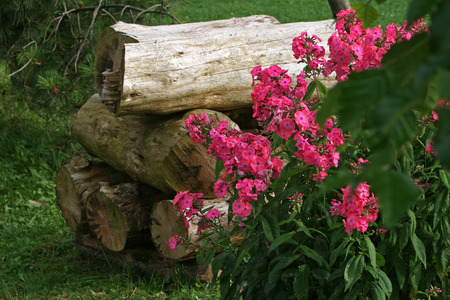 pile of logs: Pile of logs and roses