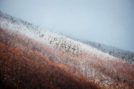 Frozen forest in Carpathian mountains Romania