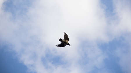 wingspread: Bird In The Sky