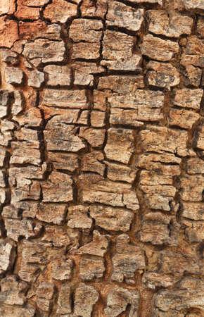 Patterns on the wood, of Cassia fistula tree photo
