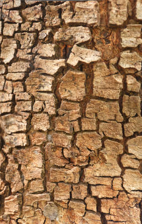 Patterns on the wood, of Cassia fistula tree