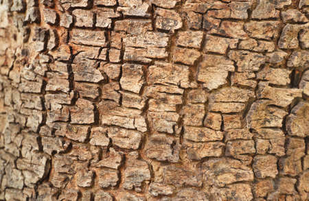 Patterns on the wood, of Cassia fistula tree